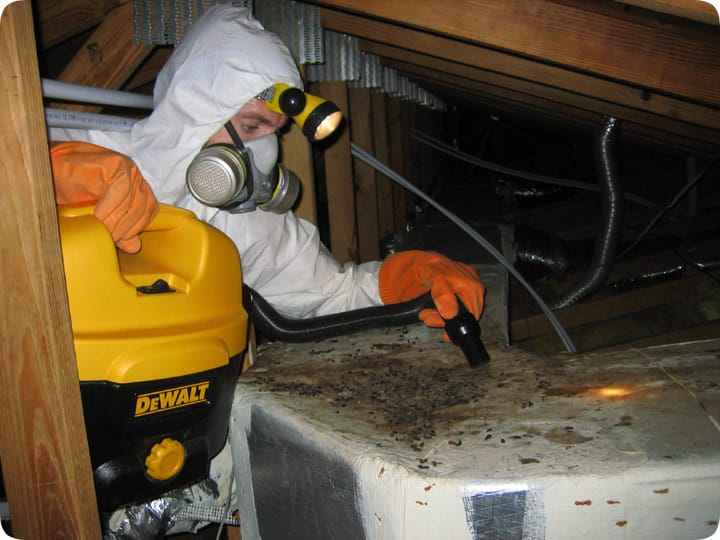 attic cleaning services oakland